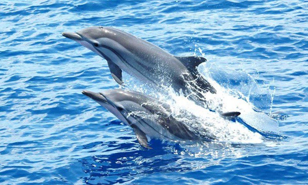 Shark and dolphin spotting